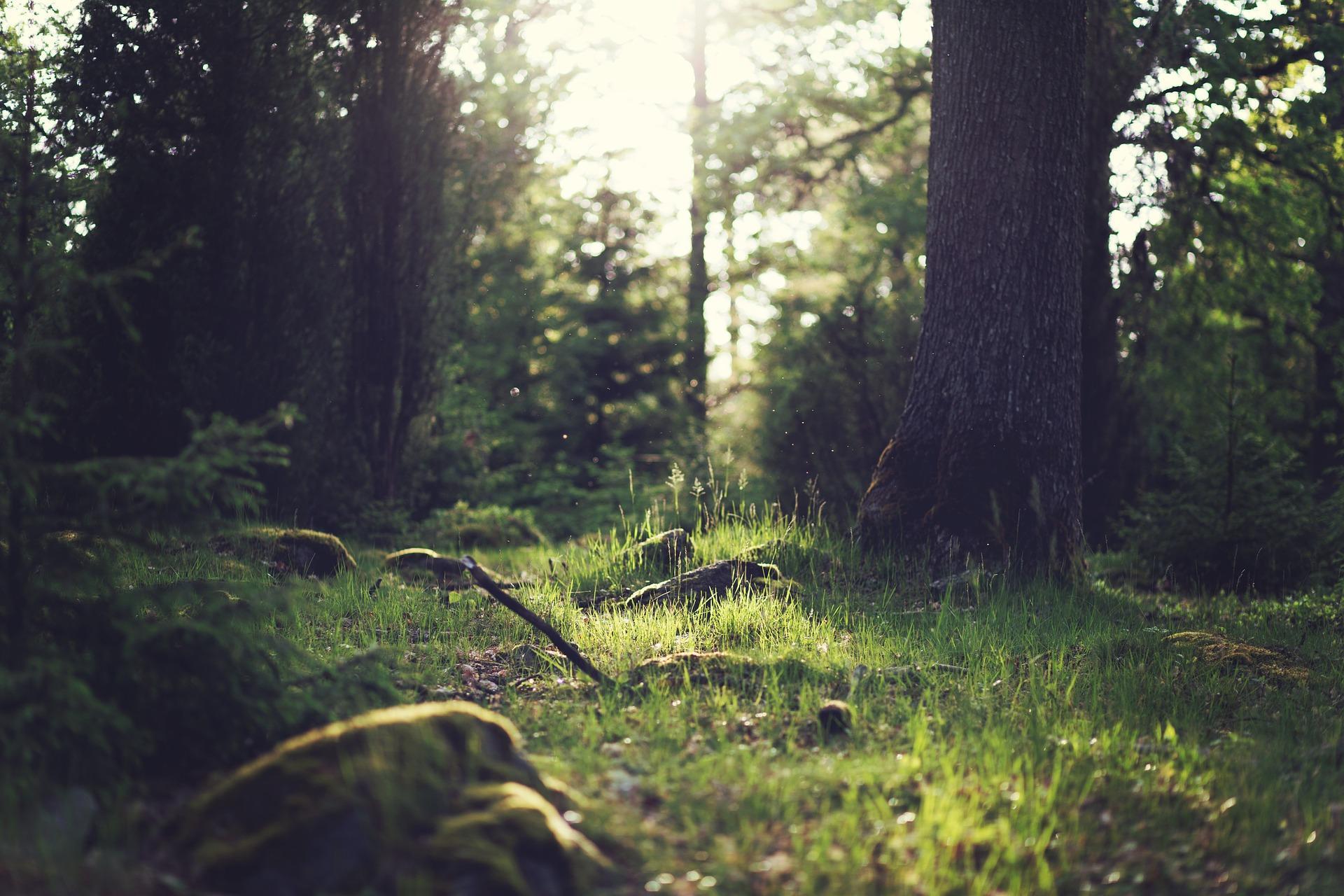 A peine partie de chez vous, vous apercevez un buisson agité de mouvements suspects, à la lisière de la forêt: